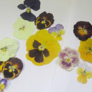 比べてみた!押し花の作り方!色鮮やかで簡単な方法は!?【ハンドメイド無料レシピ】 押し花 作り方\