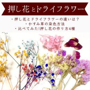 押し花とドライフラワーの違いは?作り方・染色方法・作品例・レジン応用 まとめ!【ハンドメイドの基礎知識】